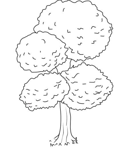 Árvore 2 6 - Aprender a Desenhar Árvores e Arbustos
