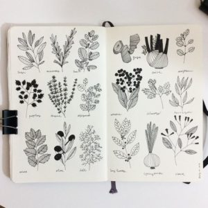 28a9c314eef3df201cfc1e57efa0c67f plant illustration spices illustration 300x300 - 8 Materiais que Você Deve ter na Hora de Fazer Desenhos!