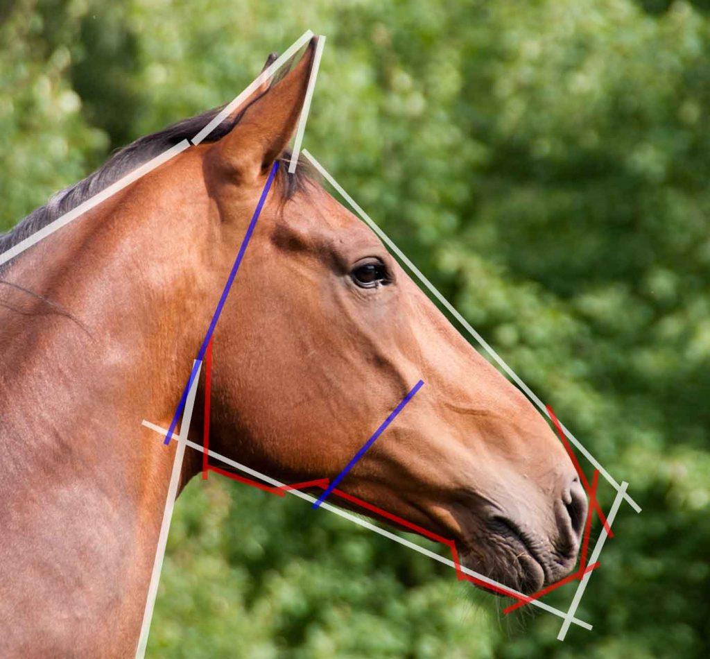 cavallo testa linee disegno 1024x950 1 - Como Desenhar Um Cavalo