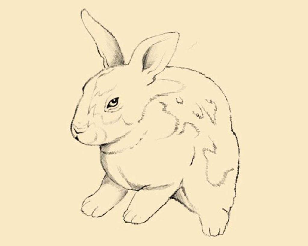 disegnare coniglio step 3 1024x819 1 - Como Desenhar Um Coelho