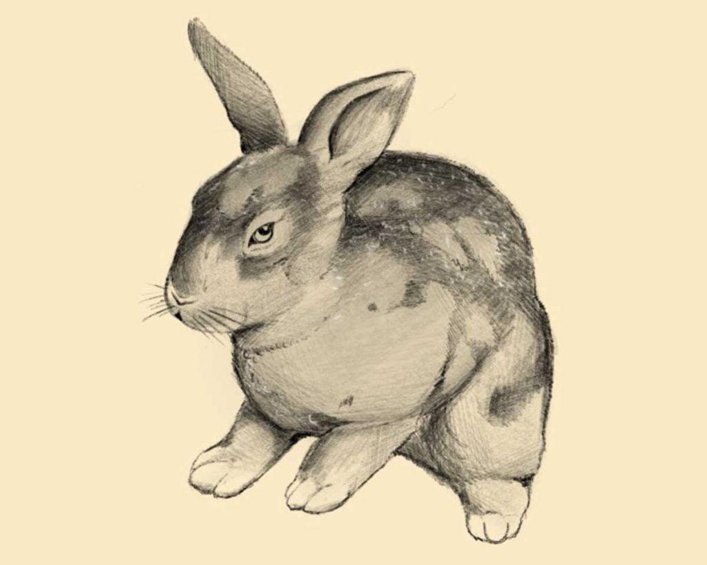 disegnare coniglio step 4 1024x819 1 - Como Desenhar Um Coelho