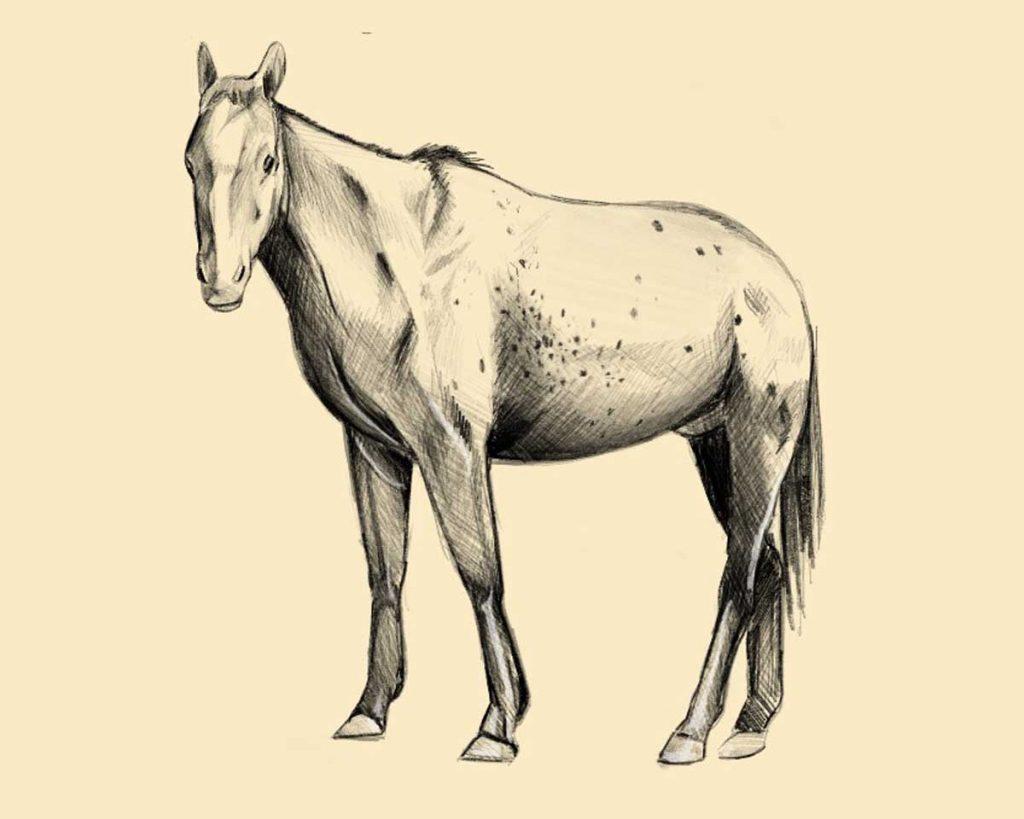 disegnare un cavallo seconda parte 1024x819 1 - Como Desenhar Um Cavalo