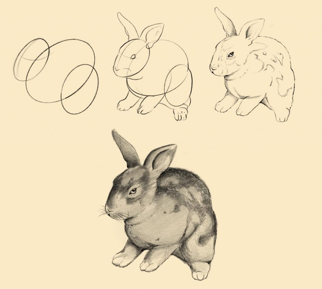 guida illustrata per disegnare coniglio 1024x918 1 - Como Desenhar Um Coelho