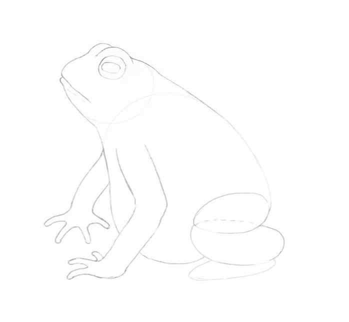 how to draw a frog step by step 10 - Como Desenhar Um Sapo