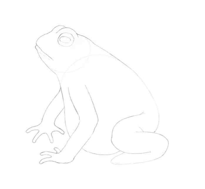 how to draw a frog step by step 11 - Como Desenhar Um Sapo
