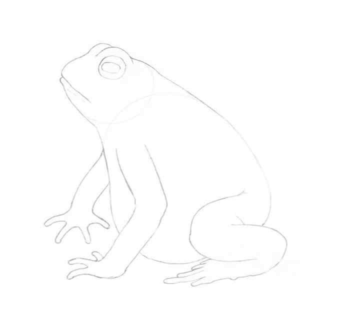 how to draw a frog step by step 12 - Como Desenhar Um Sapo