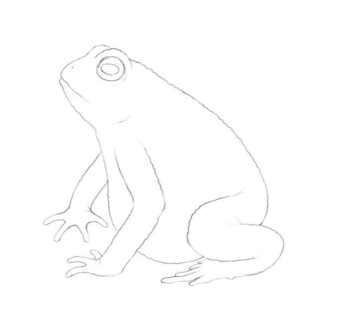 how to draw a frog step by step 13 - Como Desenhar Um Sapo