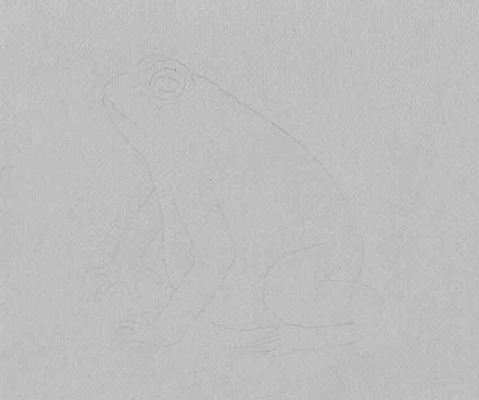 how to draw a frog step by step 14 - Como Desenhar Um Sapo