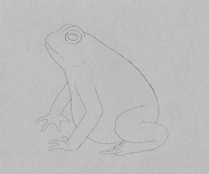 how to draw a frog step by step 15 - Como Desenhar Um Sapo
