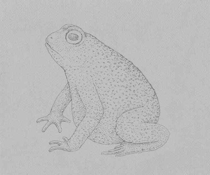 how to draw a frog step by step 17 - Como Desenhar Um Sapo