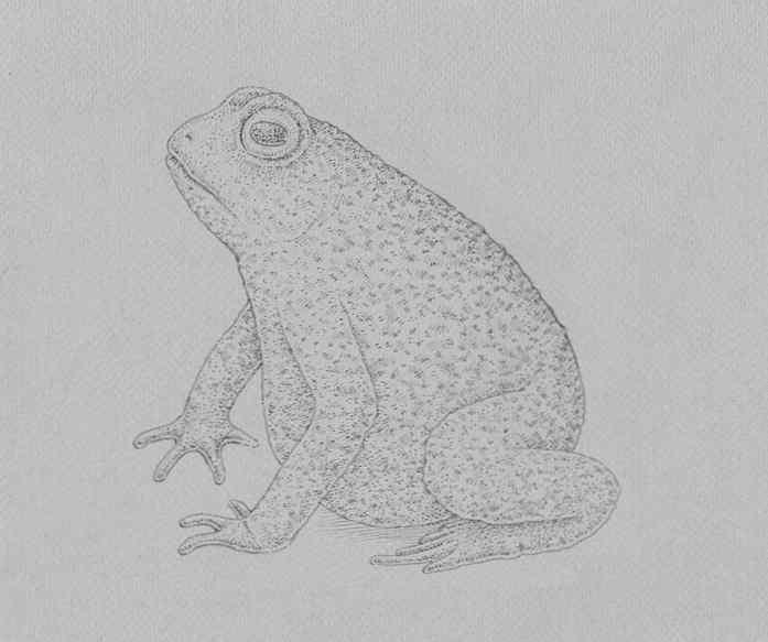 how to draw a frog step by step 19 - Como Desenhar Um Sapo