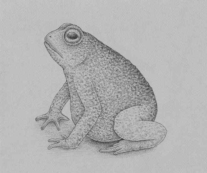 how to draw a frog step by step 23 - Como Desenhar Um Sapo