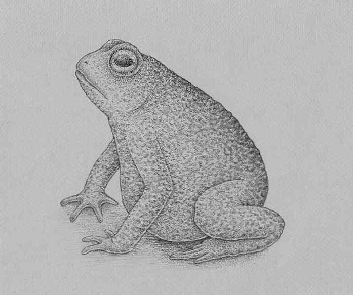 how to draw a frog step by step 24 - Como Desenhar Um Sapo