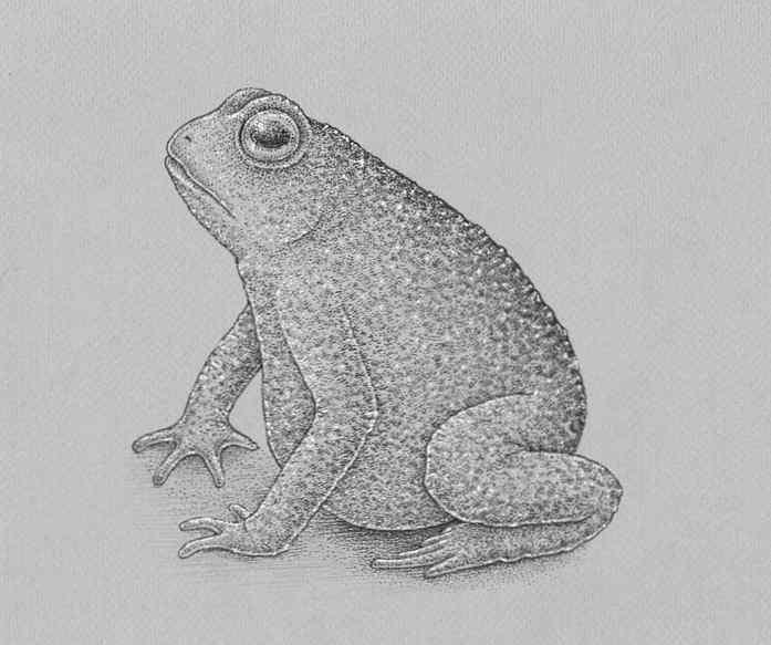 how to draw a frog step by step 25 - Como Desenhar Um Sapo
