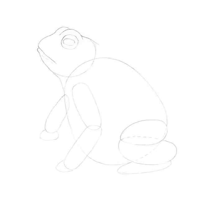 how to draw a frog step by step 7 - Como Desenhar Um Sapo