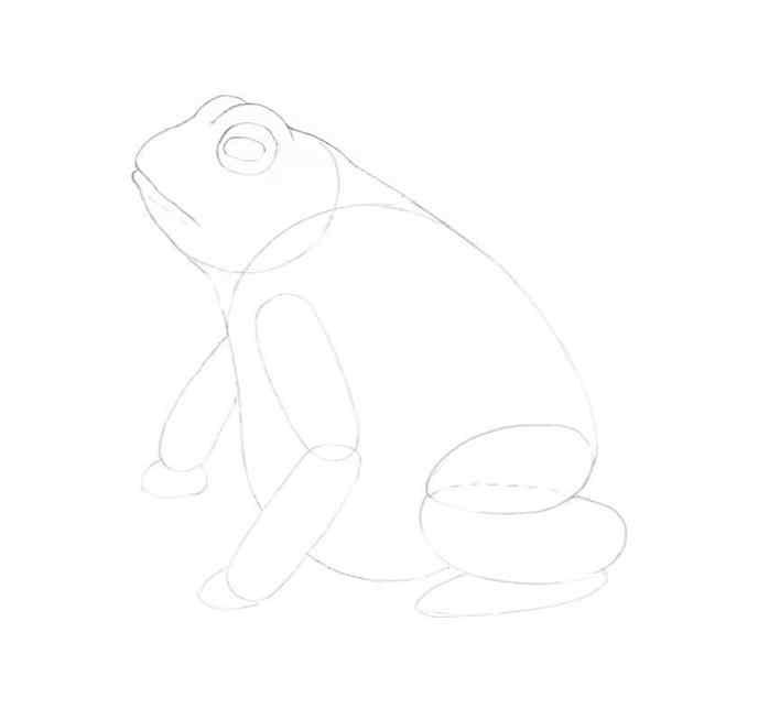 how to draw a frog step by step 8 - Como Desenhar Um Sapo