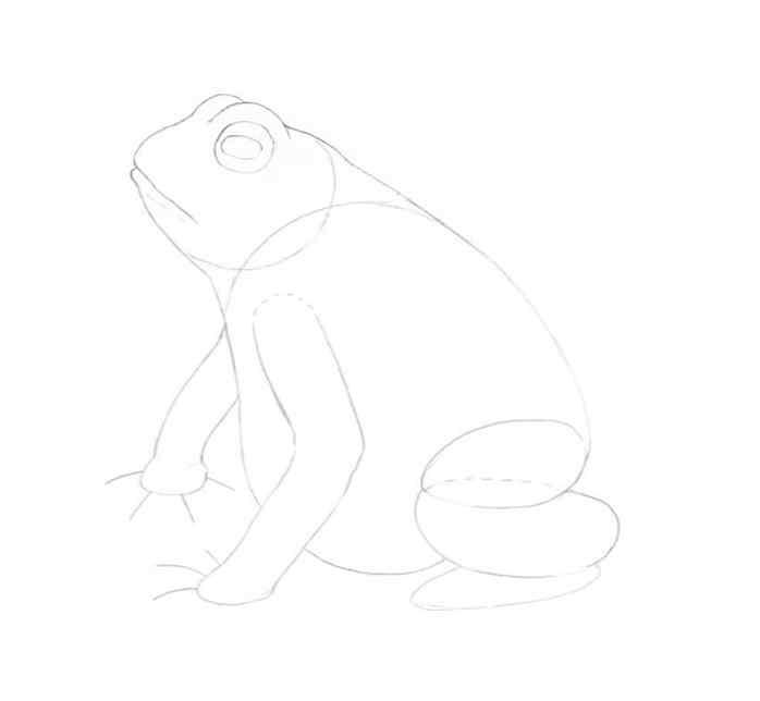 how to draw a frog step by step 9 - Como Desenhar Um Sapo